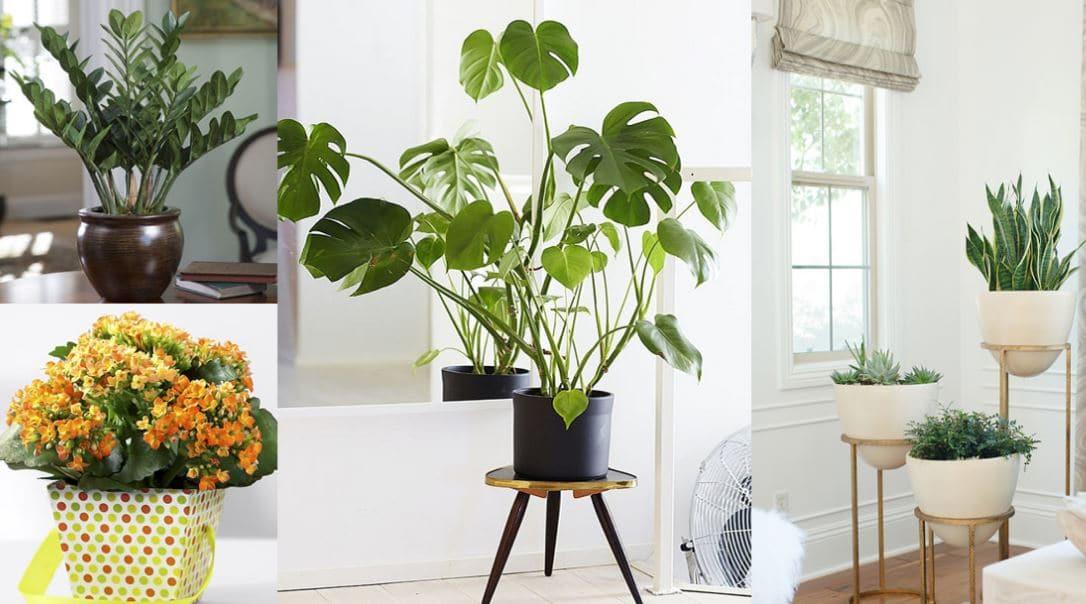 macetas plantas decoración