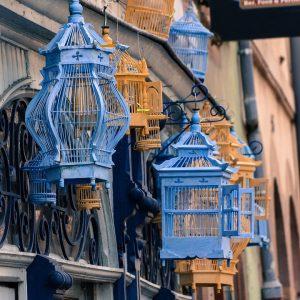 jaulas azules
