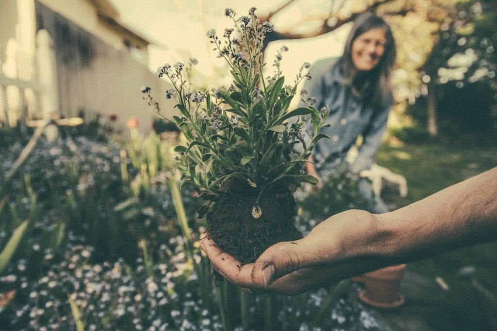 trasplante de plantas